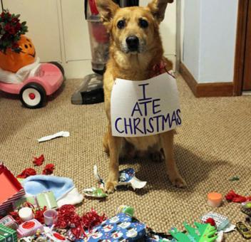 Immagini Animali Natale.Animali Natale La Gallery Tutta Da Ridere Foto 1 Di 7