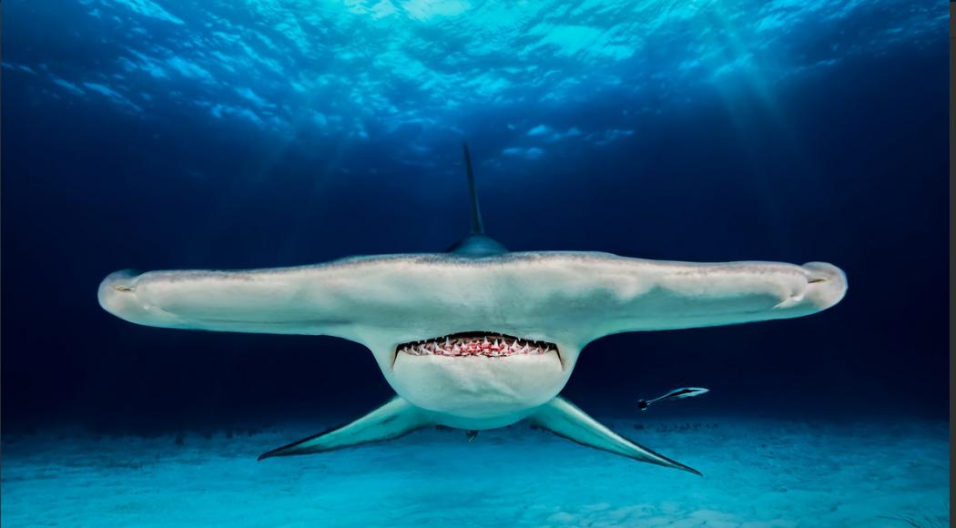Incredibili bellezze sottomarine: la gallery mozzafiato