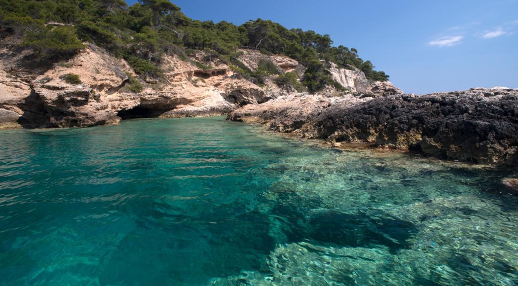La barriera corallina? Si trova in Puglia!