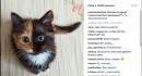 Una gattina, due colori: le incredibili foto di Yana, dal muso diviso esattamente in due metà diverse