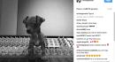 Il nuovo cucciolo di Ariana Grande fa impazzire il web