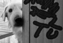 """MATTEO GRECO, una canzone per il mio cane """"Dammi del tu"""""""