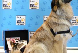 Tenente Colonello Veterinario Lorenzo Tidu, cani che rilevano il tumore alla prostata