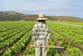 SILVIA MESSA Giornalista del mensile Milionaire, l'agricoltura i mestiere per i giovani