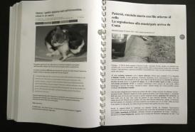 Dossier: Crudeltà Sugli Animali (Parte 2)