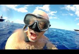 Nuotare con i delfini a Mauritius