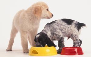 Attenzione: non date mai questi cibi ai vostri cani e gatti