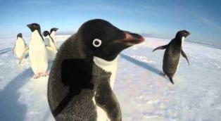 10 video di pinguini che vi regaleranno buon umore