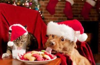 NICO TAIAN Veterinario, cosa dare ai nostri animali di quello che mangeremo noi a Natale?
