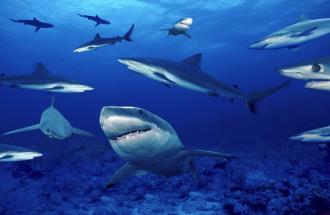 LAURA CASTELLANO Biologa dell'acquario di Genova, gli squali