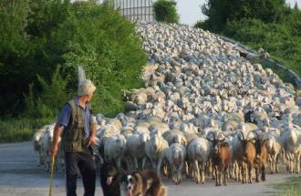 NICO TAVIAN Veterinario, gli allevatori di agnelli e capre