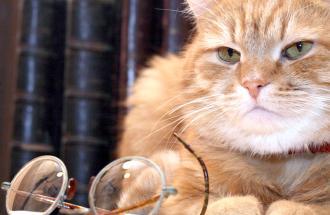 NICO TAVIAN Veterinario, la demenza senile del gatto