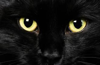 NICO TAVIAN Veterinario, consigli per un gatto investito