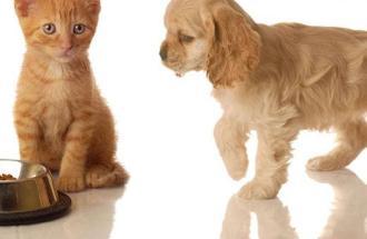 NICO TAVIAN Veterinario, cosa succede se il cane mangia il mangime dei gatti di nascosto?