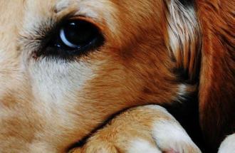NICO TAVIAN Veterinario, le reazioni allergiche nei nostri animali