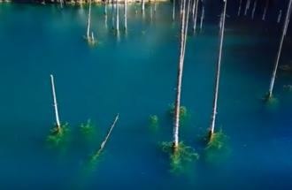 L'incredibile foresta sommersa: qui gli alberi crescono al contrario!
