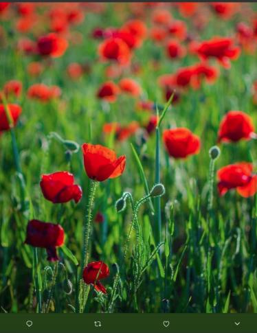 Giornata Mondiale della Poesia: ecco le più belle sulla primavera