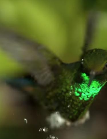 Diego Abatantuono presta la voce per un documentario ecologista