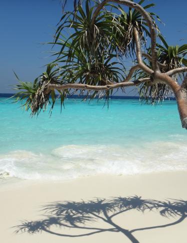 Alle Maldive si cerca un librario per una biblioteca... sulla spiaggia!