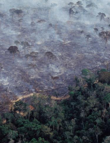 L'Amazzonia è in fiamme e il fumo si vede anche nello Spazio. Le immagini