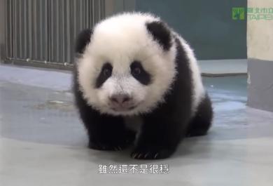 """""""È ora di andare a dormire!"""" - disse mamma panda."""
