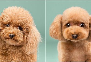 Cagnolini prima e dopo la toelette