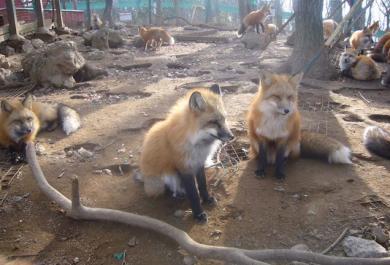 Il villaggio delle volpi