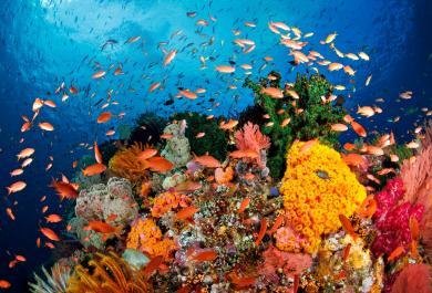 L'oceano che vorrei