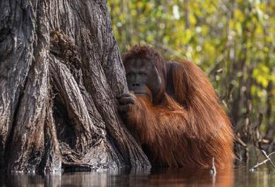 2017: le foto più belle secondo il National Geographic