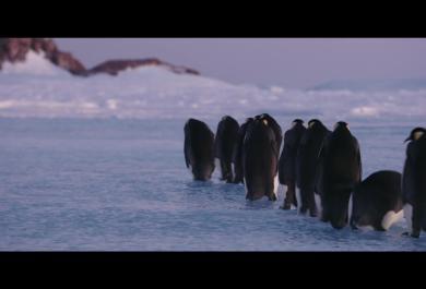 """Buffi, commoventi, emozionanti: tornano i protagonisti di """"La marcia dei pinguini"""": guarda la clip in anteprima"""