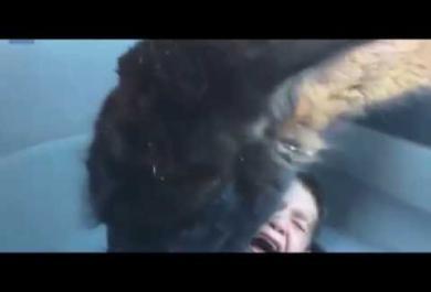 Il lama ghiottone divora la merenda di un bambino. Il video