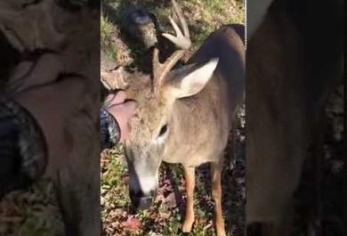 Il cervo e il cacciatore. L'incontro che non vi aspettereste