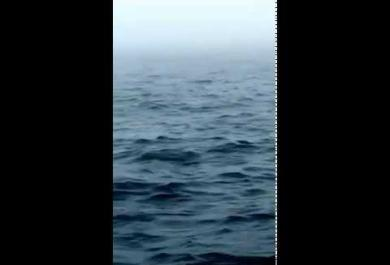 Stanno filmando l'oceano, ad un certo punto accade una cosa fantastica!