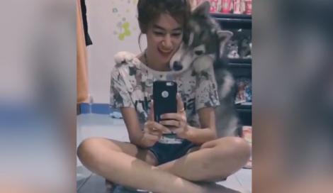 Cane fotogenico cerca disperatamente di farsi ritrarre in un selfie