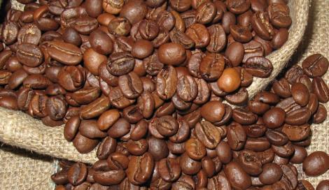 Caffè addio? Nel 2050 potrebbe scomparire