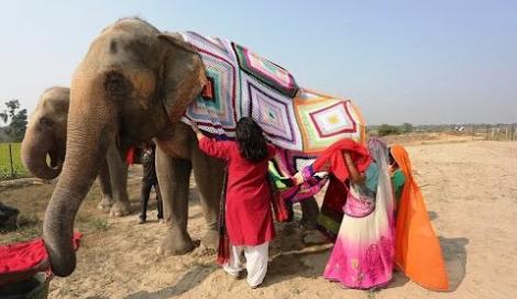 Gigantesche tute all'uncinetto per elefanti freddolosi: il video dall'India