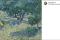 Ohibò: c' è una cavalletta intrappolata in un quadro di Van Gogh!