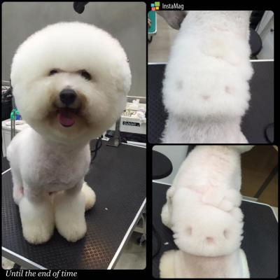 Il cane con Hello Kitty disegnato sul pelonati sul pelo