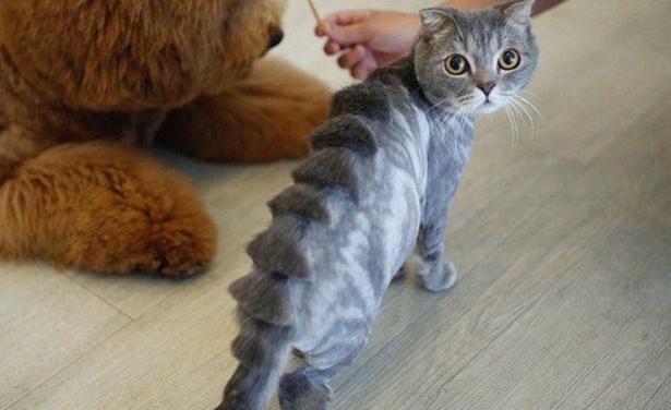 Gatti Che Si Trasformano In Dinosauri Ma Non Solo