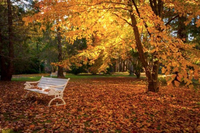 perch in autunno le foglie cambiano colore e cadono