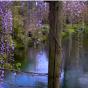 E' italiano il giardino più bello e romantico del mondo. Lo dice il New York Times!